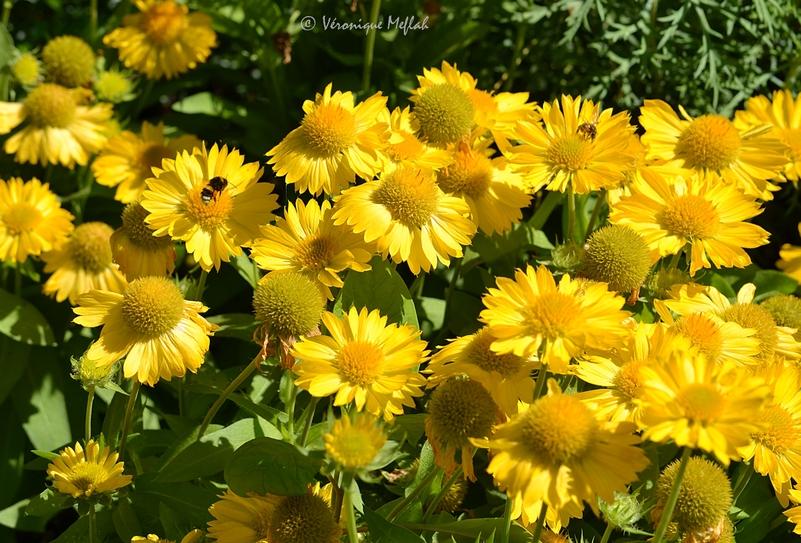 Jardin des Plantes : Petites fleurs du weekend