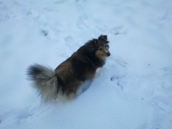 La neige est arrivée !!!
