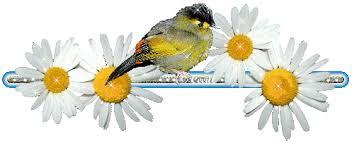 """Résultat de recherche d'images pour """"gif oiseau qui s'envole"""""""