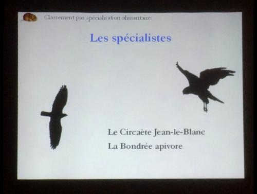 """""""Les rapaces diurnes en Côte d'Or"""", une conférence de Joseph Abel, directeur de la LPO..."""