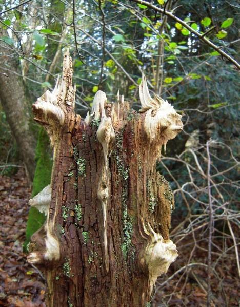 arbre aux farfadets