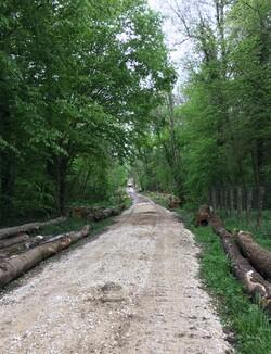 voirie forestière