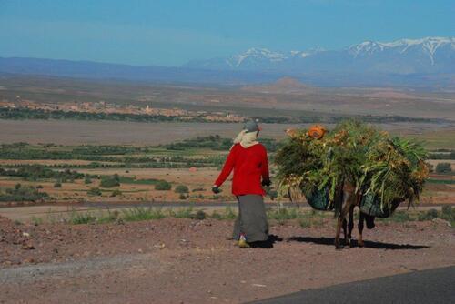 Transport d'herbe pour les animaux