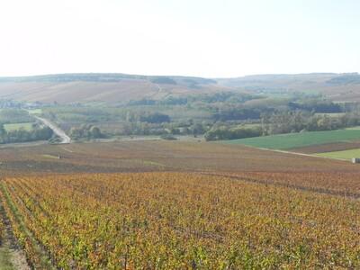 Misères des vignerons, la Saint Vincent