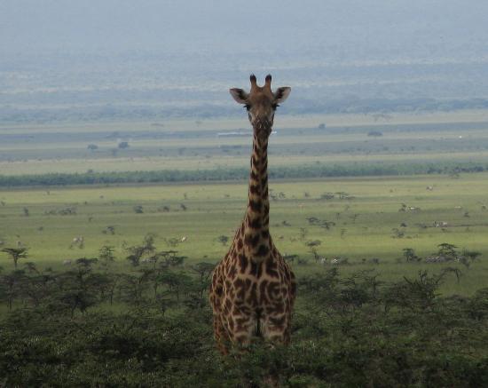 masai-mara-national-reserve.jpg