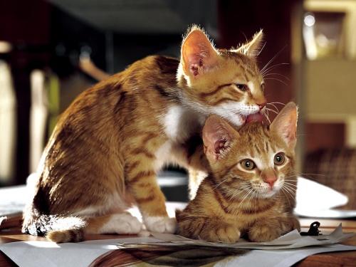 pour les amoureux des chats suite