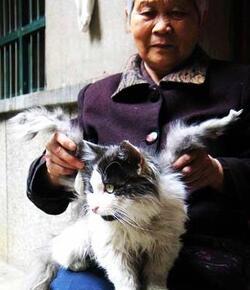 Le chat ailé !!!