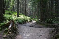 Parcours de découverte à Très-le-Mont