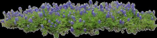 Massifs de Fleurs (nouveau)