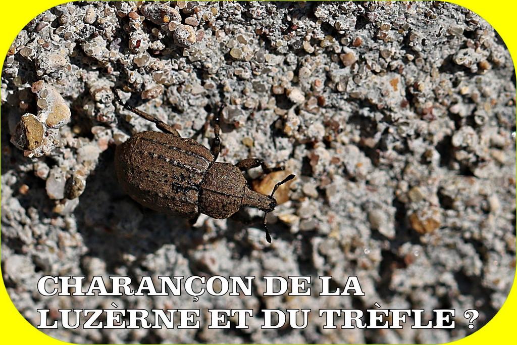 ORCHIS MILITAIRE ET PHOTOS D'HIER