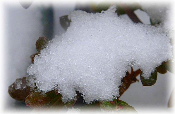 neige-feuilles.jpg