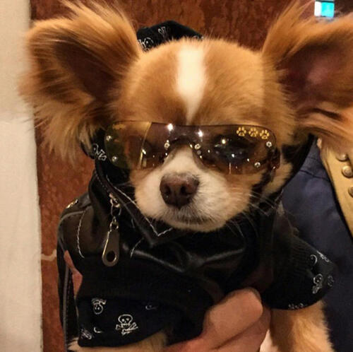 les animaux les plus swag de la parie fashion week