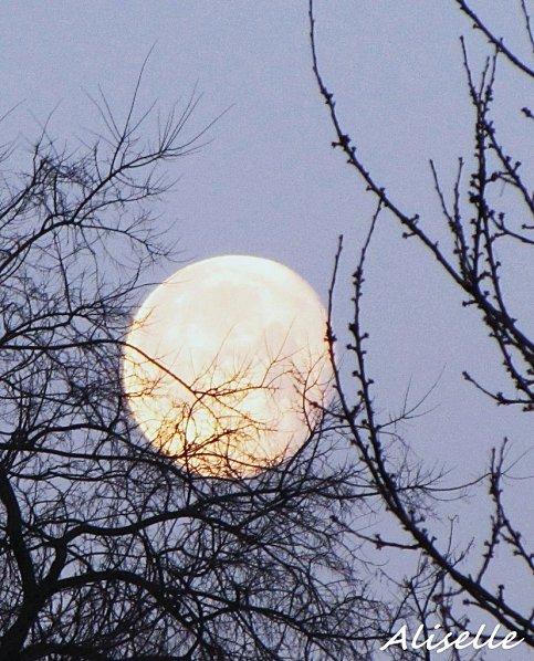 Lune se couchant 01 02 2010 #1