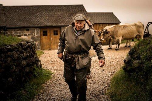 24- De beaux portraits de vaches!