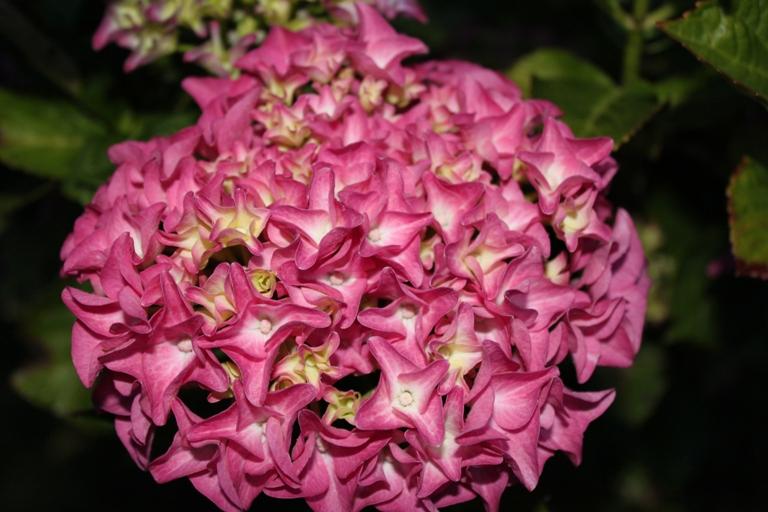 Jardin en fleurs ! (3)