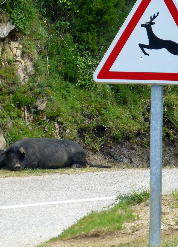 - L'île aux Cochons...