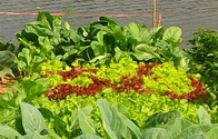 Légumes...
