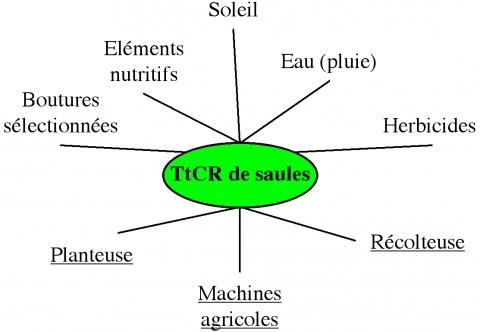 Fig 2 : Intrants et matériels nécessaires à la culture du TTCR de saules