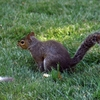 hyde-park---squirrel-14.jpg