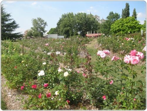Un jardin dans la ville
