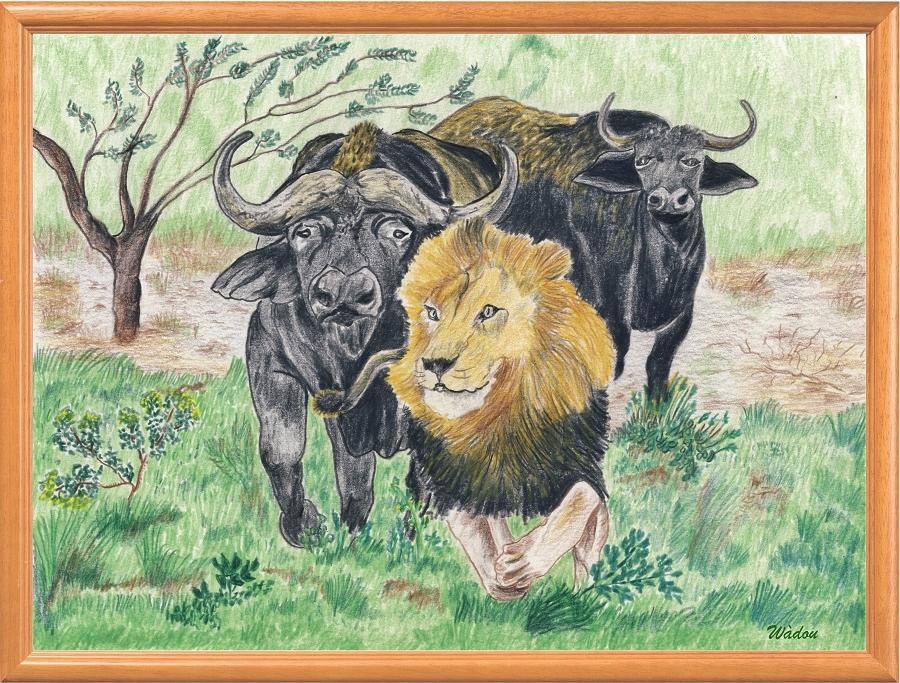 """Dessin rapport de force entre buffles et lion   """"La fuite du Roi"""""""