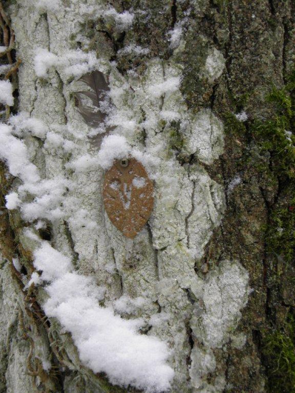 L'arbre aux trois chouettes