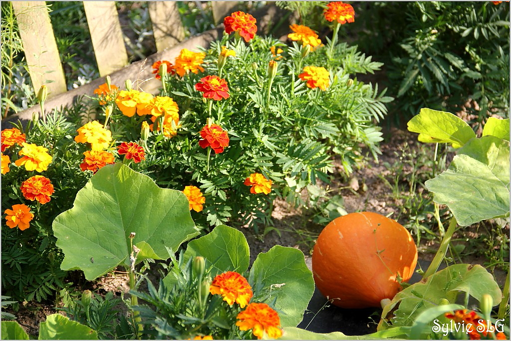 Dans mon jardin ...