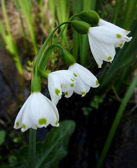 Fleurs blanches 01