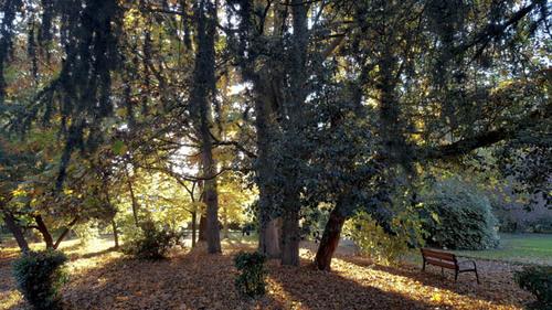 L'automne est bien arrivé