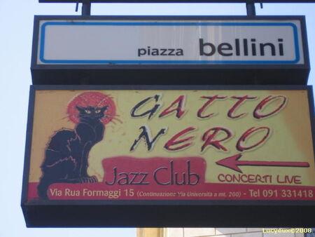 Gatto_Bellini