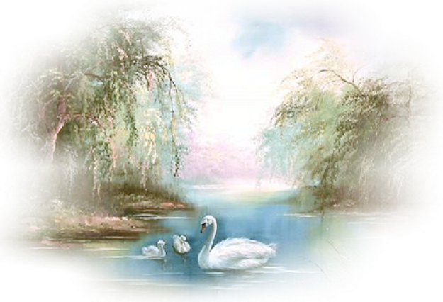 Les cygnes blancs,