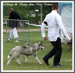 Elevage Husky Glasko L'Union 2012
