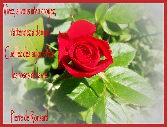 Carte fleurie les roses avec un petit message passion for Livraison fleurs avec message