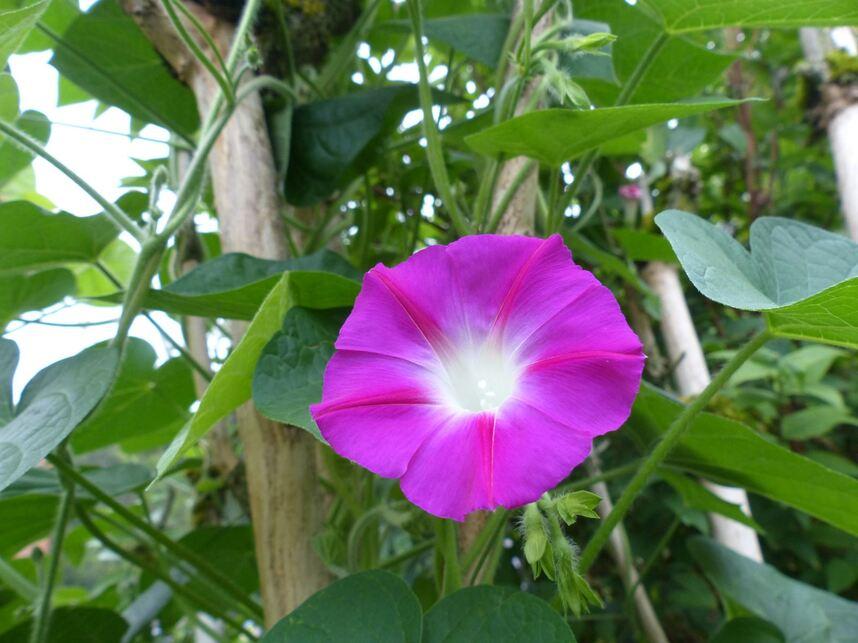 Couleurs de fin d'été au jardin