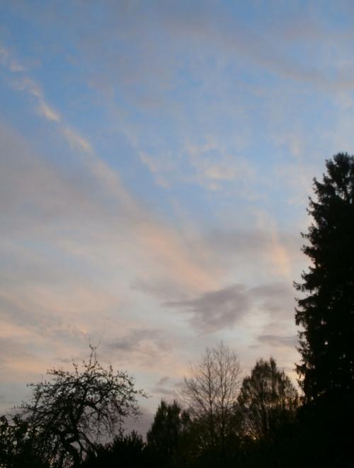 ciel nuageux éclairé de rayons du soleil levant, format portait, bas et angle bas à droite limités par des silhouettes d'arbres encore noires