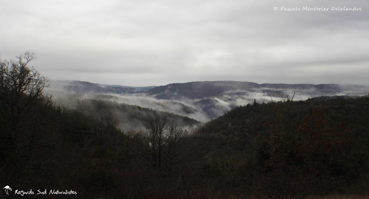 Massif de l'Aigoual dans les nuages...
