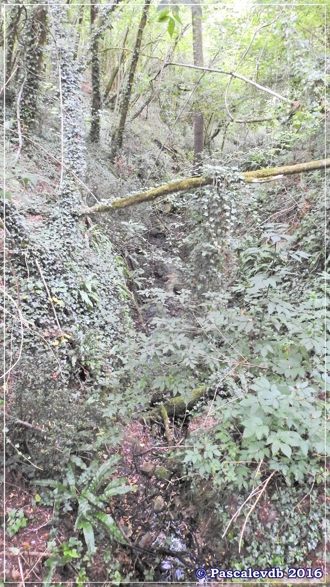 Réserve géologique de Saucats - Août 2016 - 2/10