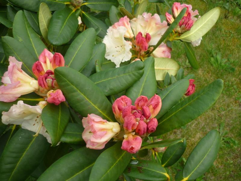 Déclinaison florale!!!