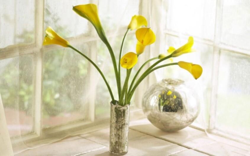Yellow_calla_lilies_bouquet.jpg