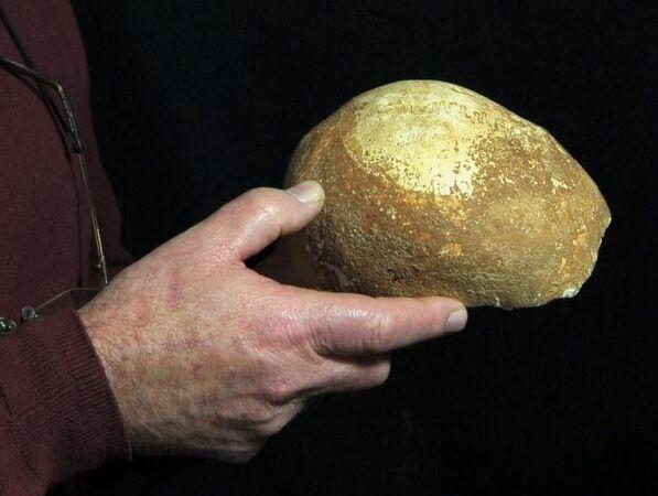 Le crâne de l'Homme de Manot, retrouvé dans une grotte située en Galilée, au nord-ouest d'Israël date de 55.000 ans. © Clara Amit, Israel Antiquities Authority