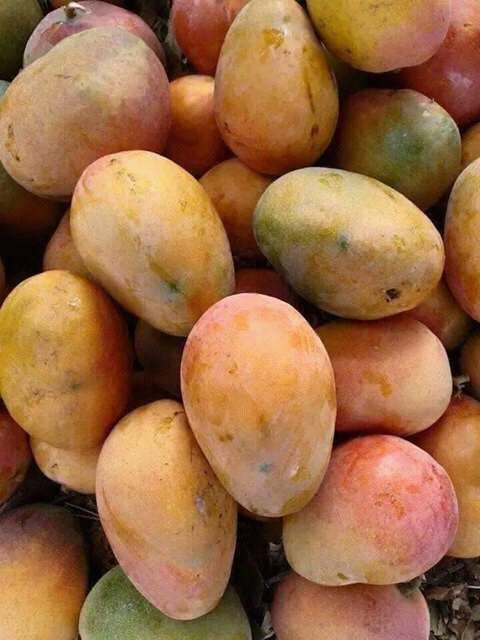 Salade de mangue et passion  au gingembre confit.