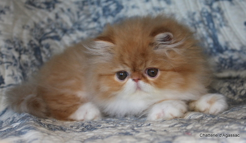 Mes images de chats