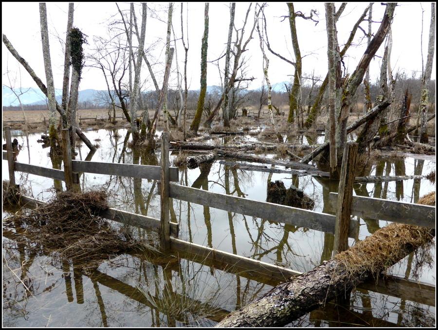 Le Marais de Lavours, après les grosses pluies : N°2