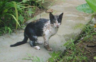 """Connaissez-vous l'histoire de """"Moche"""" le chat ?.cette histoire est belle et déchirante."""