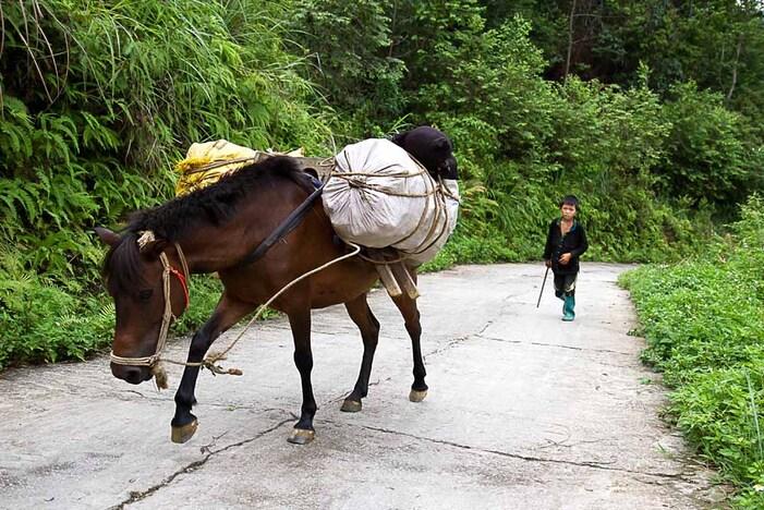 En voiture, a pied, a cheval