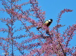 """"""""""" Les arbres  à  floraison de couleur """" rose"""" & les Statues."""""""""""""""
