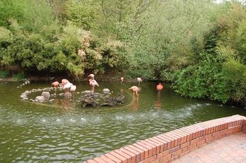 Zoo Osnabruck d50 2012 005