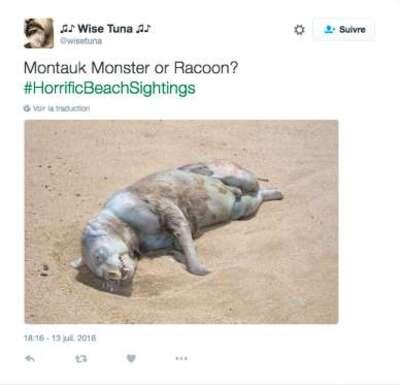 Le monstre de Montauk
