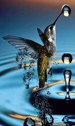 Colibri kérosène.