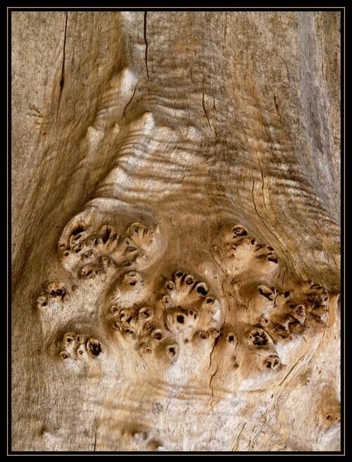 Messages de l'arbre...